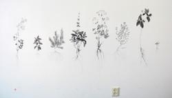 wortelplanten