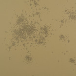 Dust No 2