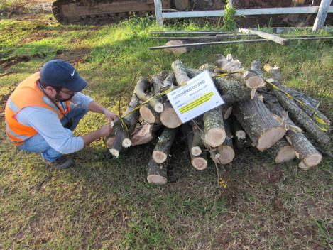 DNIT trabalha para a preservação da biodiversidade no entorno das obras da Travessia Urbana de Santa