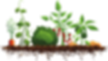 kisspng-sensory-garden-community-gardeni