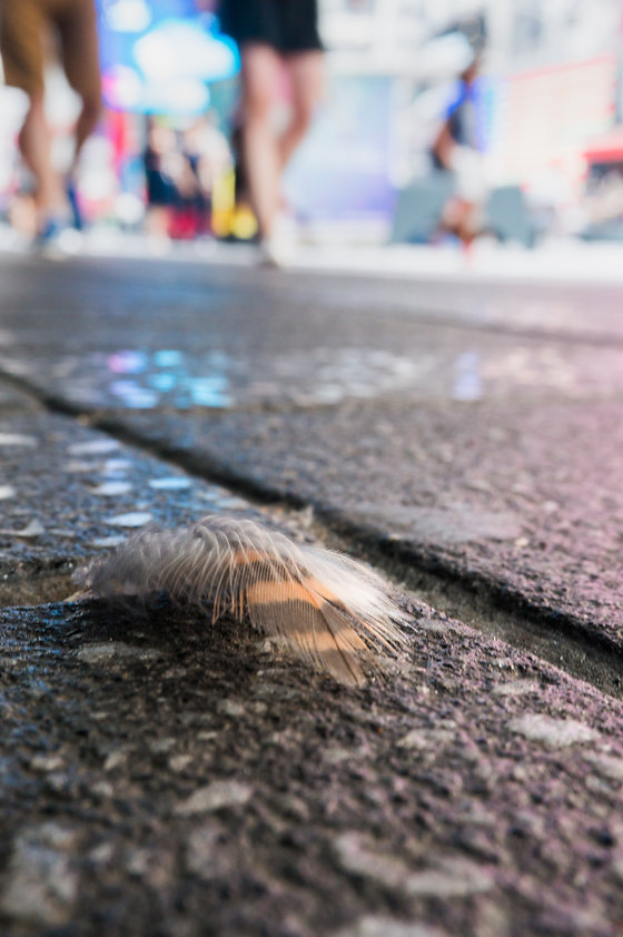 feather, New York sidewalk, Times Square