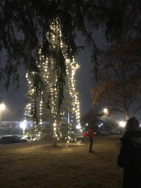 Holiday tree.jpg