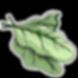 kualla_leaves.png