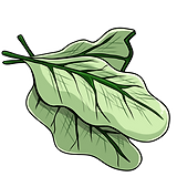kualla_leaves.png