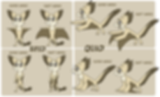 quill_revamp_wing_types.png
