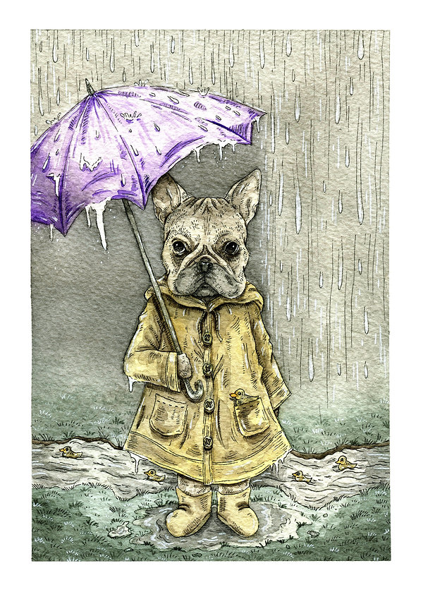 Rainy Frenchy.jpg