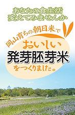 haigamai02.jpg
