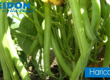 Ingredient Spotlight Haricot Vert Beans
