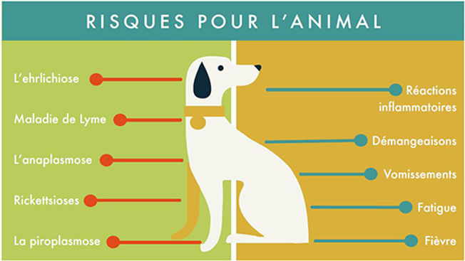 tique-risques-animal.jpg