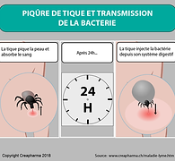 infographie-maladie-Lyme-01.png