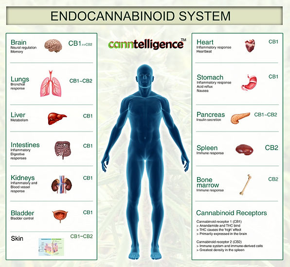 CannTell_InfoPoster_ECS-Cannaman-8x10-we