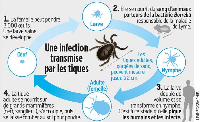 6650532_ig-maladie-lyme-2-01.jpg