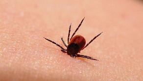 Maladie de Lyme : les députés américains veulent savoir si le Pentagone a exposé la population à des
