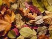 Herbst- /Winteröffnungszeiten