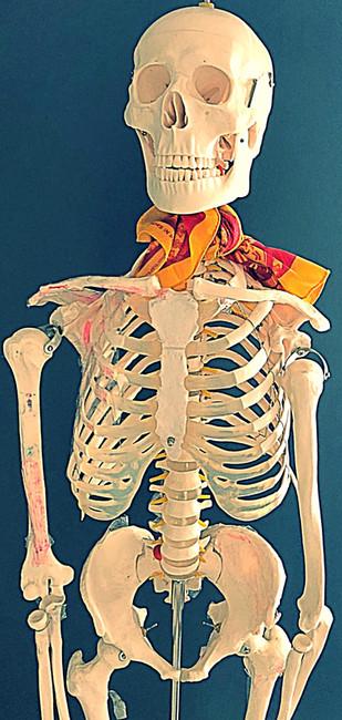 "Life size skeleton ""Bobby Bones"""