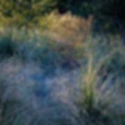 James Cowlin In An Oracle Woods.jpg