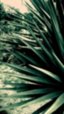 social distancing plant2.jpg