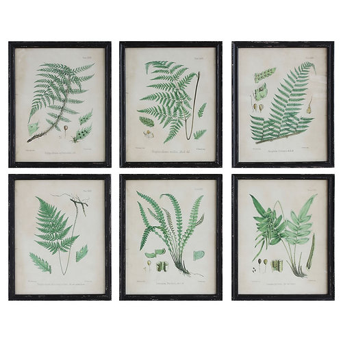 BOTANICAL FRAME (SET OF 6)