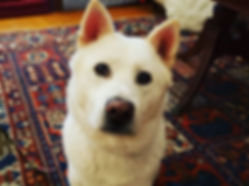 Meet Oji, our newest student!  His owner