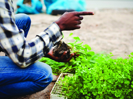 What Is The Role For Social Entrepreneurs In Addressing The Food Security Challenge in Cape Town?