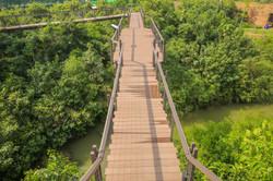 ป่าในกรุง_5941