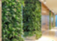 ekogreen สวนแนวตั้ง ผนังหญ้าเทียม