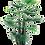 Thumbnail: Fan palm tree  (120 ,180 cm.)