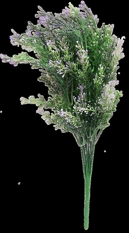 หญ้าดอกมิโดริ