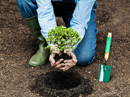To Plant a Tree or not to Plant a Tree