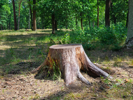 Tree Damage -- How to Avoid it!