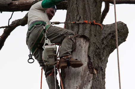 What To Do After Cutting Down Your Tree
