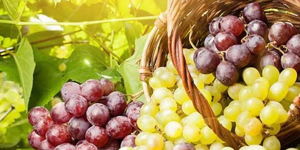 Aromas e sabores das uvas internacionais mais famosas