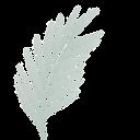 Coffee Logo Leaf.png
