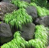 border plantings.png