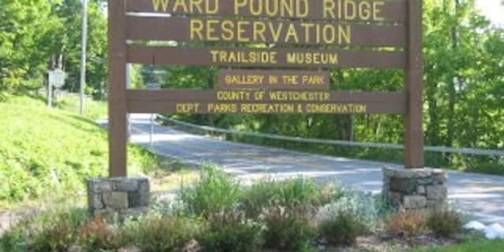 Camping Trip - Ward Pound Ridge