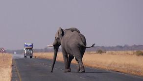"""""""הפיל שלי ואני""""  בשבוע של השראה ושל עשייה מקדמת שליחות"""