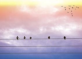 ציפורים.jpg