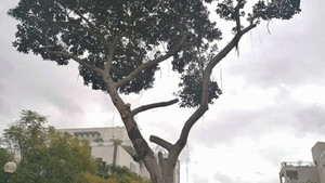 סיפור קצר על עץ עתיק שלימד אותי שיעור לחיים