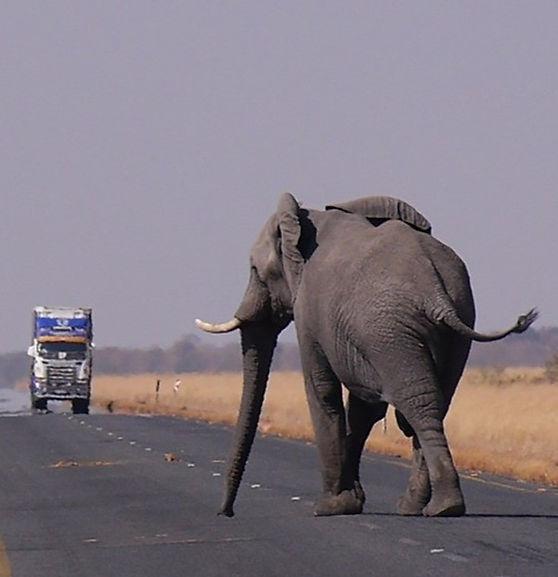 הפיל שלי ואני יצאנו לדרך 2_edited.jpg