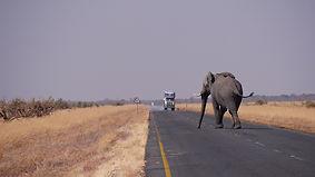 הפיל שלי ואני יצאנו לדרך 2.jpg