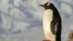 #השיעור_שלמדתי_מהפינגווין