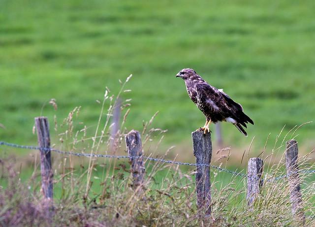 ציפור על עמוד, מעבר מעבר לגדר
