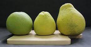 【貓媽行醫手記】柚子文旦