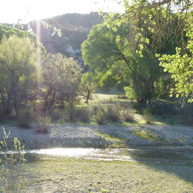 Sunny day at creek