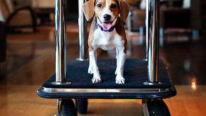 Traveling With Your Pet Made Easy