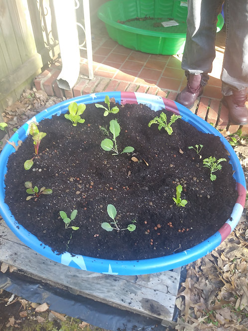 Kiddie Pool Raised Bed Garden... (Fully planted) Call to order (205)422-0529