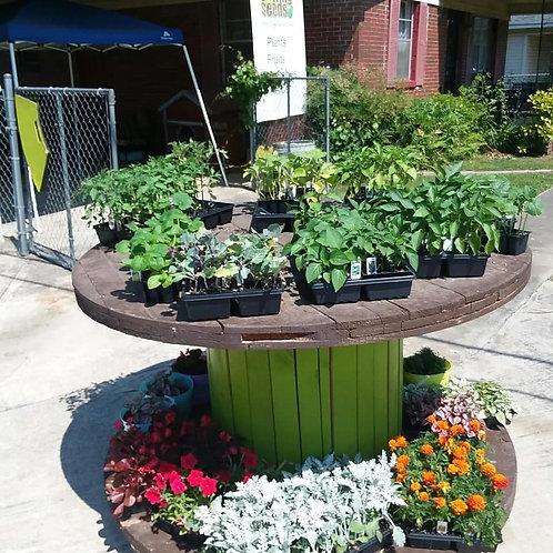 Vegetable Plants List: Call (205)422-0529