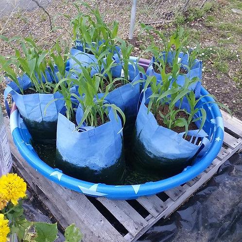 Raised Kiddie Pool Grow Bag Garden.. (Call to order (205)422-0529