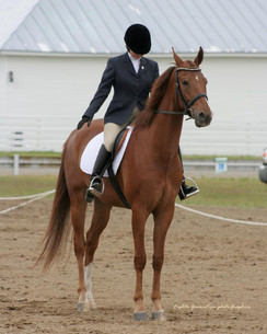 Stonecroft Pot of Gold in the dressage ring