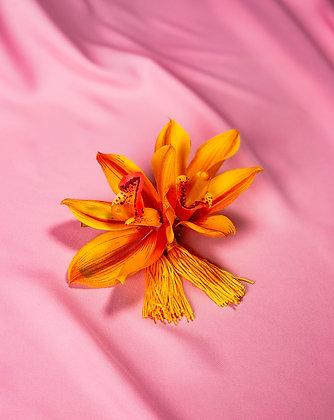 Bico de Pato Orquídeas Amarelas